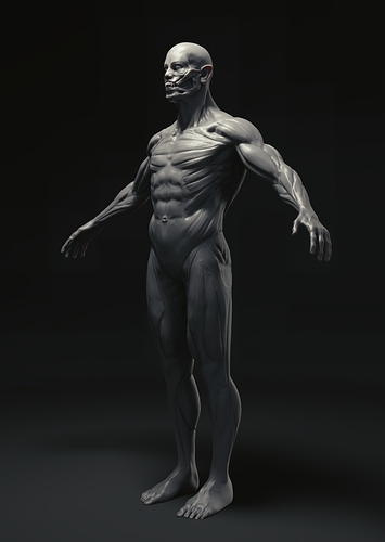 200417_muscle